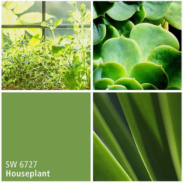 SW 6727 Houseplant