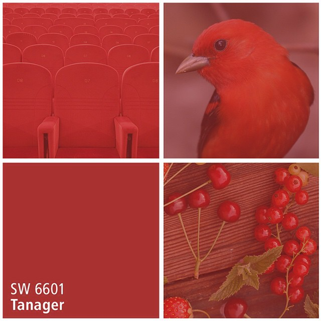 SW 6601 Tanager