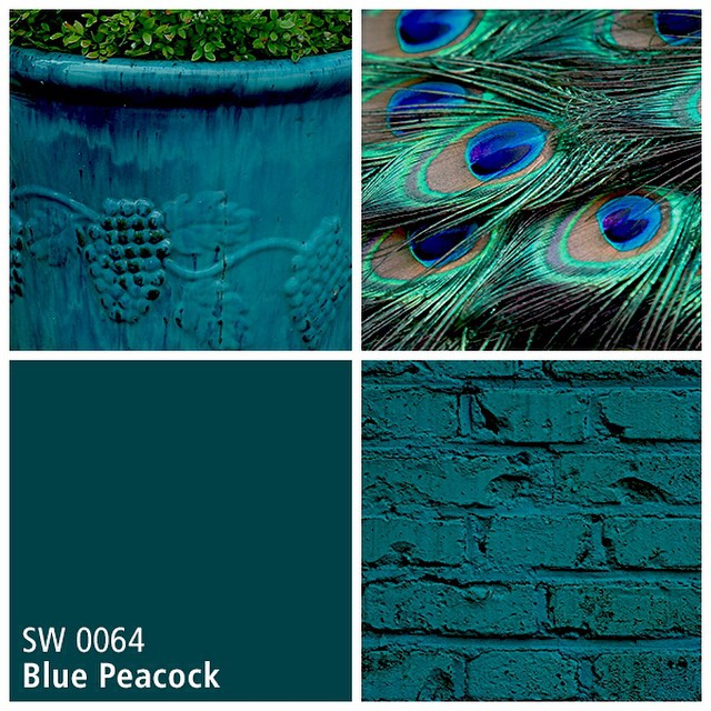 SW 0064 Blue Peacock